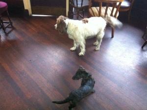Scooby in The Caledonia with pub landlady's dog Miss Haversham