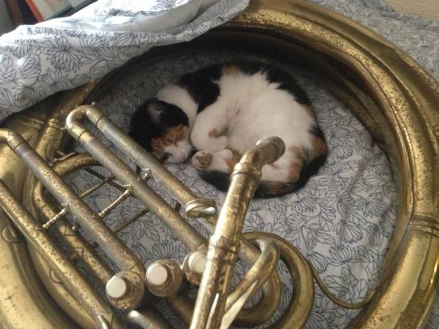 Tuba player Lee Dunkley's cat!