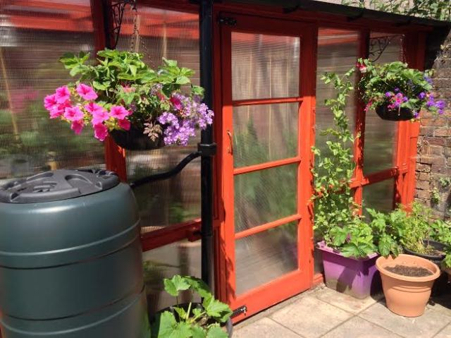 The new greenhouse