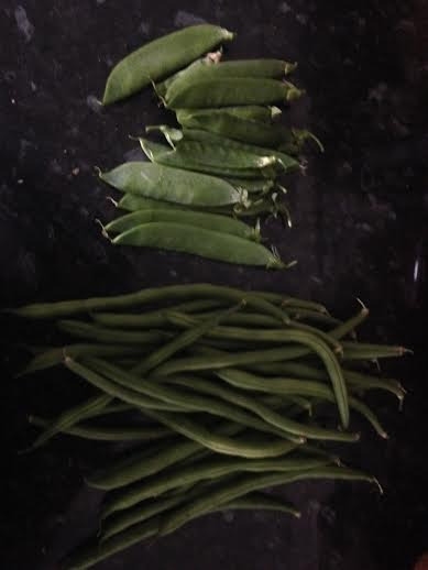A good day for peas and French beans!