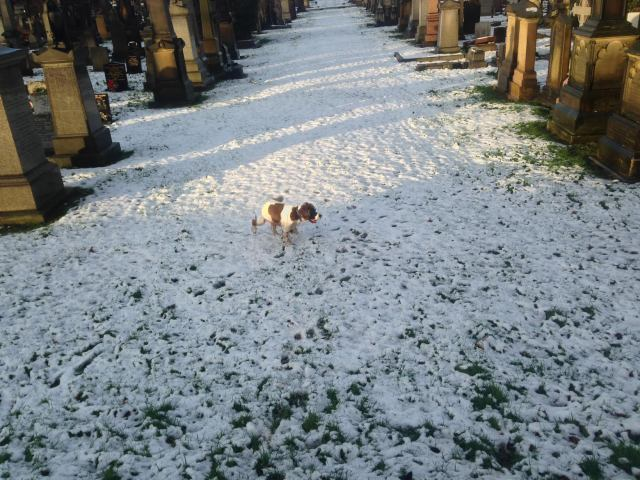 A very excited 'old boy' in the snow toady! - Toxteth Cemetery.