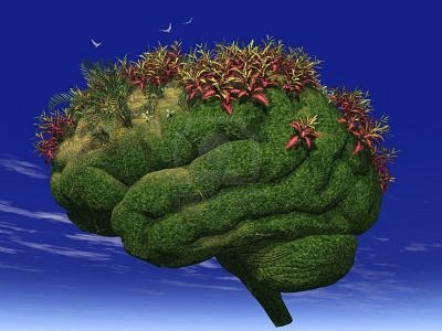 Your-Brain-is-Like-A-Garden.jpg